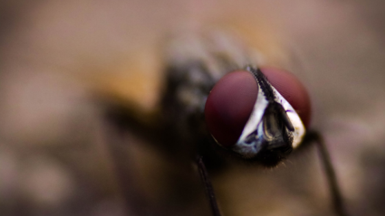 6 Steps to Keep Flies out of Food Production Facilities